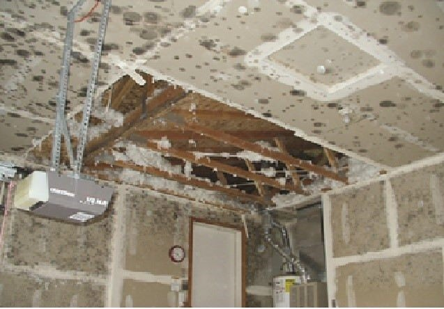 Mold – What is it and should you be concerned?
