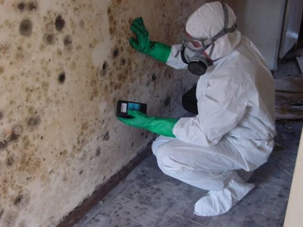 Mold Will Cause Secondary Damage