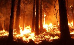 3 Things You Can Do in the Event of a Wildfire